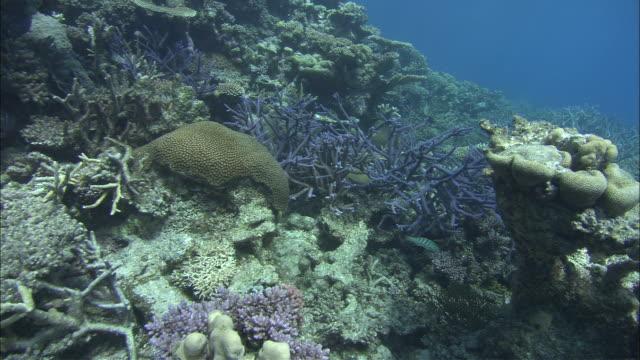 sunlight plays across corals in the great barrier reef. - koralle nesseltier stock-videos und b-roll-filmmaterial