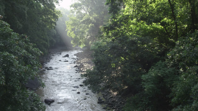 "stockvideo's en b-roll-footage met sunlight pours into forested river valley, costa rica - ""bbc natural history"""