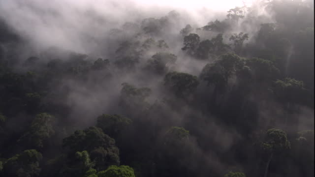 sunlight radiates through mist over a rainforest canopy in sabah, borneo. available in hd. - borneo stock-videos und b-roll-filmmaterial