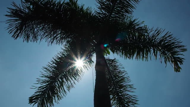 Sunlight rays in Palm Trees