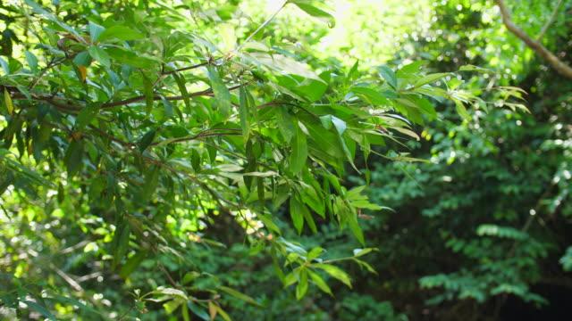La lumière du soleil reflètent sur les feuilles vertes des arbres tropicaux