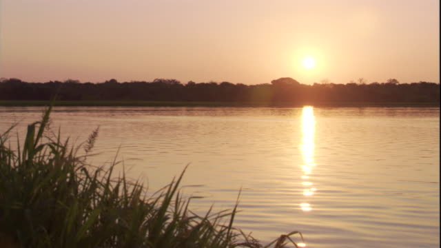 sunlight reflects from the amazon river late in the day. available in hd. - rio delle amazzoni video stock e b–roll
