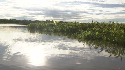 sunlight reflects off a placid river lined with dense foliage. pov from boat. - marsh stock videos & royalty-free footage