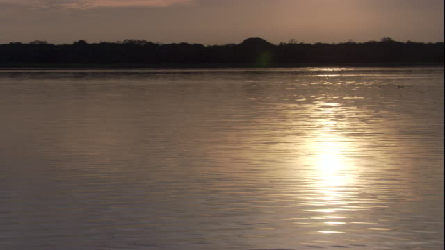 stockvideo's en b-roll-footage met sunlight reflects on the amazon river as a tern dives below the surface. available in hd. - water bird
