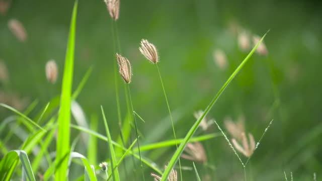 sonnenlicht durch schönen grünen rasen gesehen - gras stock-videos und b-roll-filmmaterial