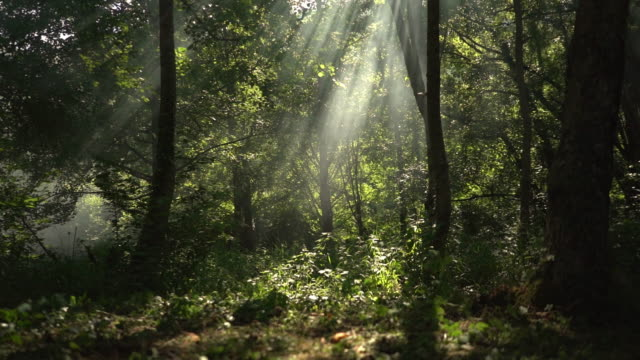 sunlight seen through branches in forest. - treetop stock videos & royalty-free footage