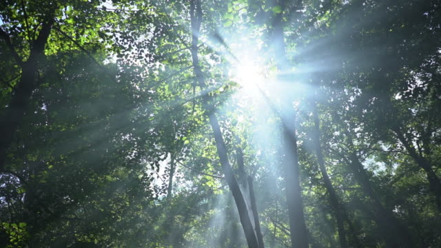 sunlight seen through branches in forest. - tree stock videos & royalty-free footage