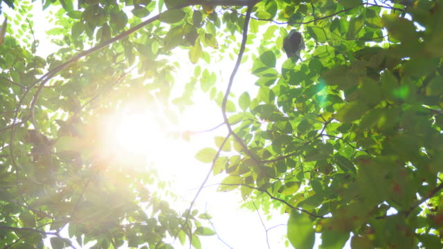 sunlight seen through branches the leaves. 4k format - foglia video stock e b–roll