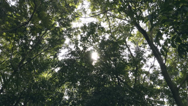 sunlight seen through branches the leaves - saturated colour stock videos & royalty-free footage