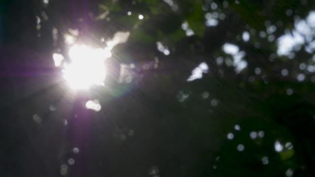 vídeos y material grabado en eventos de stock de luz del sol, visto a través de sucursales - foco difuso
