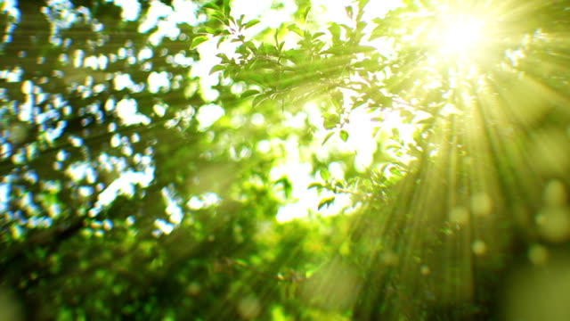 stockvideo's en b-roll-footage met sunlight seen through branches (loopable) - tekstveld