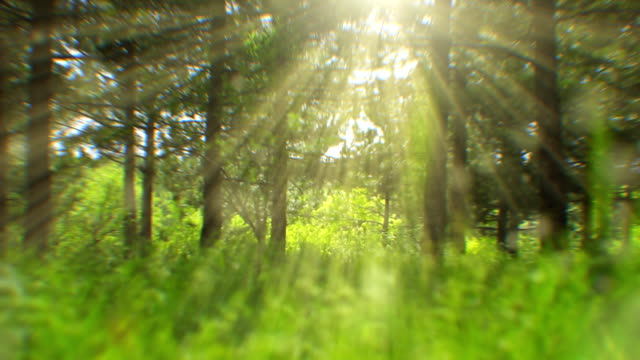 sunlight seen through trees (loopable) - sunbeam stock videos & royalty-free footage