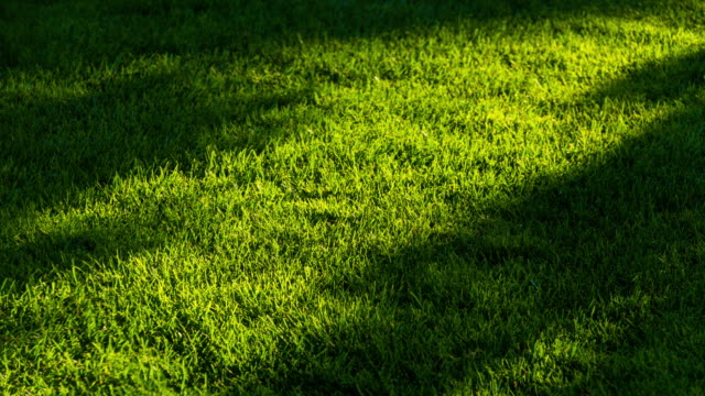 sunlight shade motion on green grassland 4k dci - shade stock videos & royalty-free footage