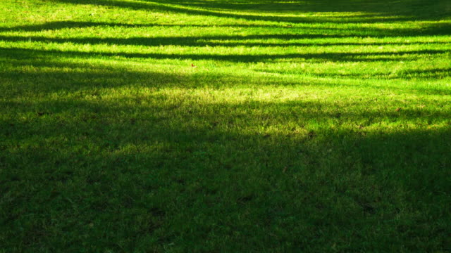 sunlight shade motion on green grassland 4k - shade stock videos & royalty-free footage
