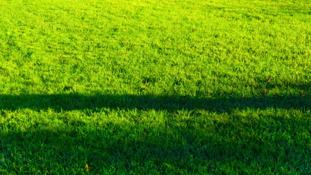 sunlight shade motion on green grassland - shade stock videos & royalty-free footage