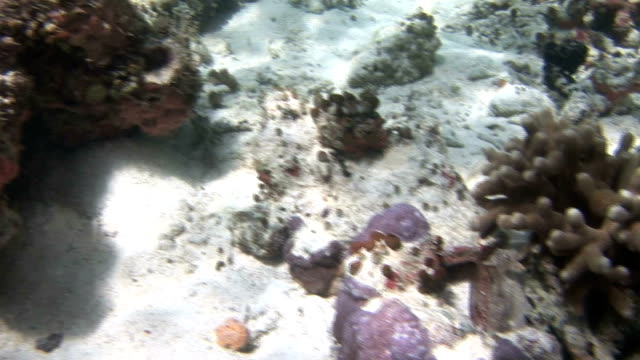 stockvideo's en b-roll-footage met sunlight shimmers on corals on the bottom of jellyfish lake. available in hd. - ongewerveld dier