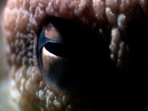 sunlight shimmers on the eye of an octopus. - extreme close up stock videos & royalty-free footage