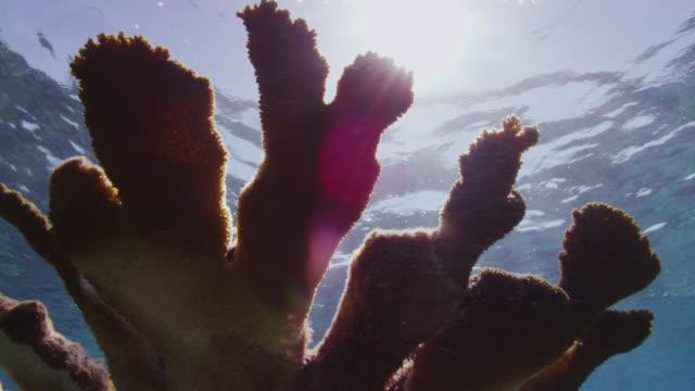 stockvideo's en b-roll-footage met sunlight shimmers over coral on reef, bimini, bahamas - bimini