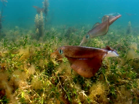 Sunlight shimmers over the seabed as squid swim above aquatic plants.