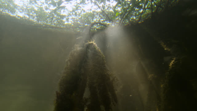sunlight shimmers through mangrove swamp, belize - sumpf stock-videos und b-roll-filmmaterial