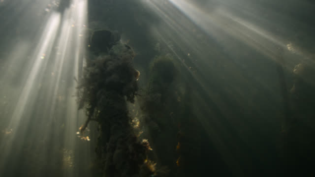 sunlight shimmers through mangrove swamp, belize - underwater stock videos & royalty-free footage