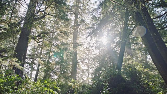 Sunlight shines through a forest as a light rain falls.