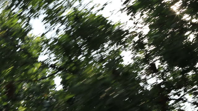 sunlight shines through leaves. - moving past stock videos and b-roll footage