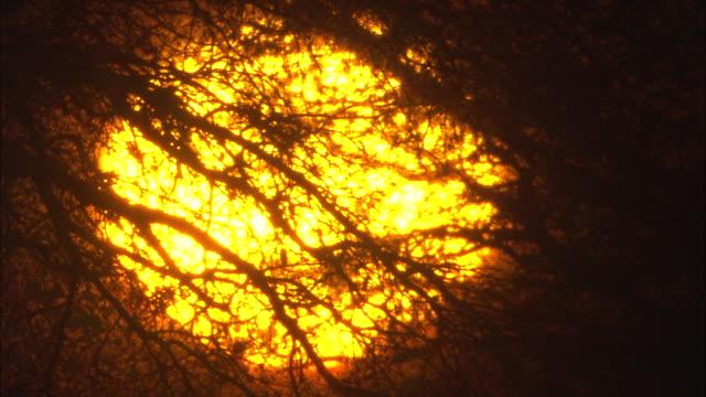 vídeos y material grabado en eventos de stock de sunlight shines through the branches of a leafless tree. - provincia occidental del cabo