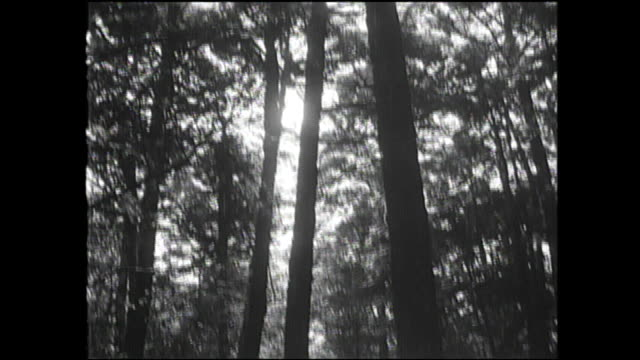 Sunlight shines through the dense trees in Aokigahara Forest.