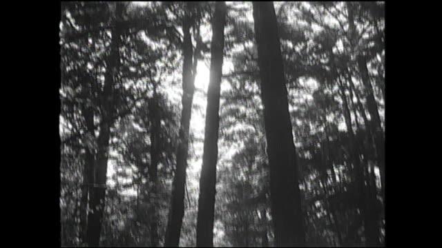vidéos et rushes de sunlight shines through the dense trees in aokigahara forest. - après guerre