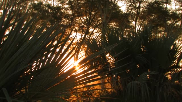 sunlight shines through the leaves of palm trees. available in hd. - blattfiedern stock-videos und b-roll-filmmaterial