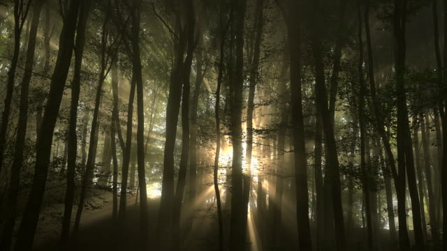 Sunlight shining in foggy forest