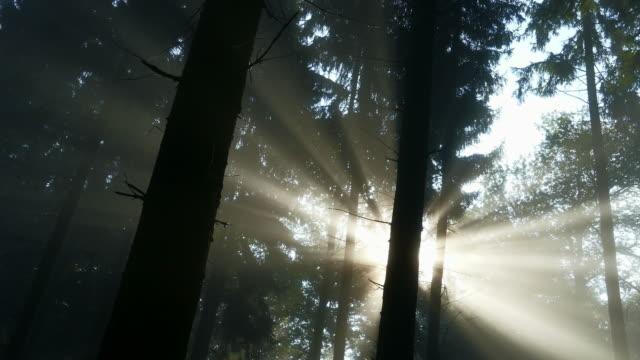 Sunlight shining in foggy forest