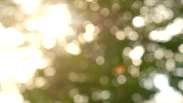 Sunlight shining through the leaves of trees, natural blurred background, Nature abstract background, nature green bokeh