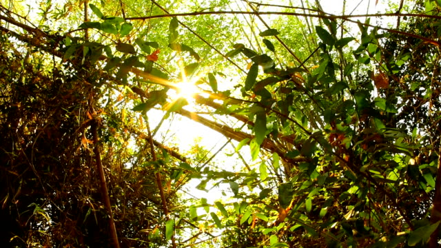 sunlight shining through the leaves - bamboo plant stock videos and b-roll footage