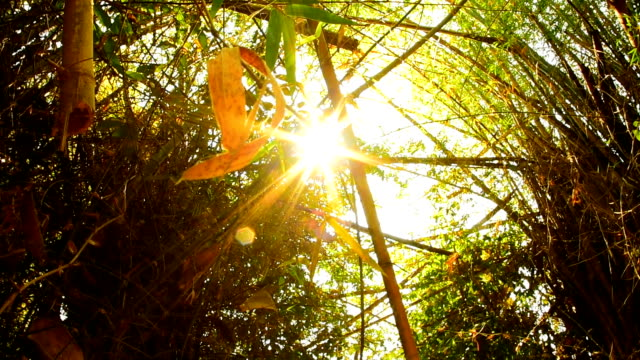 Sunlight shining through the leaves