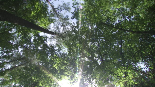 sunlight sparkles through a leafy forest canopy. - astronomy stock videos & royalty-free footage