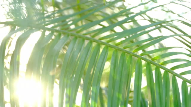 sunlight streaming through leaves of palm tree - scenics stock videos & royalty-free footage