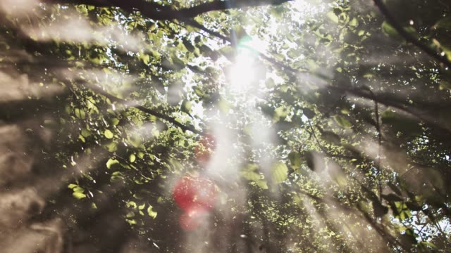 sunlight streaming through trees in forest - low angle view stock videos & royalty-free footage