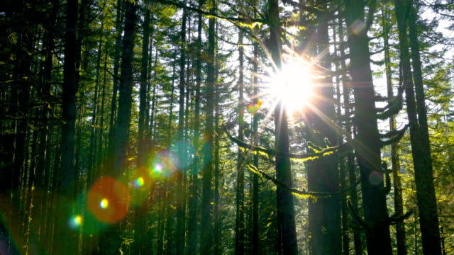 Sunlight through dense Forest