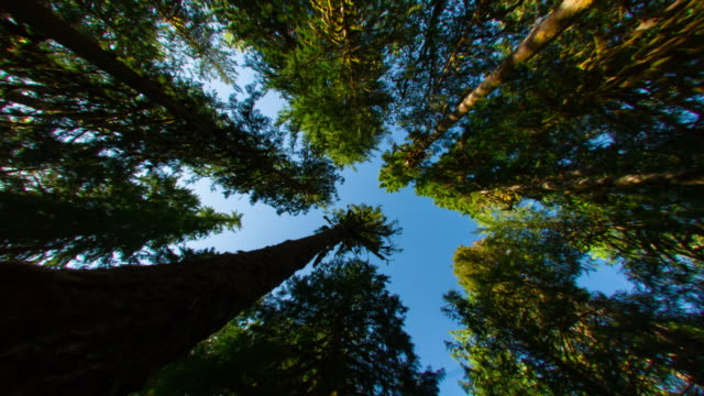 sunlight through forest tree canopy - pacific northwest usa stock videos & royalty-free footage