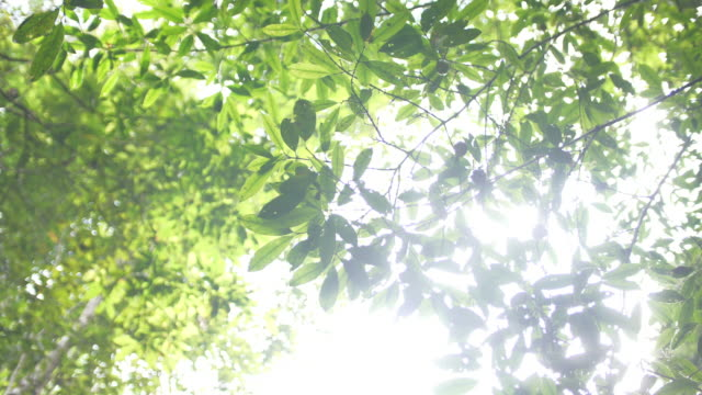sunlight through green leaf - saturated colour stock videos & royalty-free footage