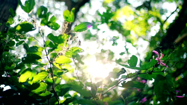 sunlight through green leaves in summertime. - evergreen stock videos & royalty-free footage