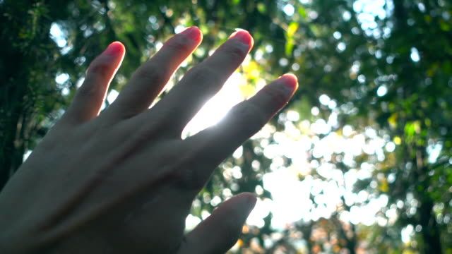 sunlight through human fingers - human finger stock videos & royalty-free footage