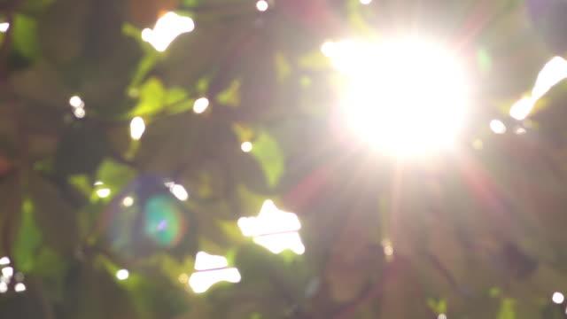 sunlight through leaf nature scene, 4k