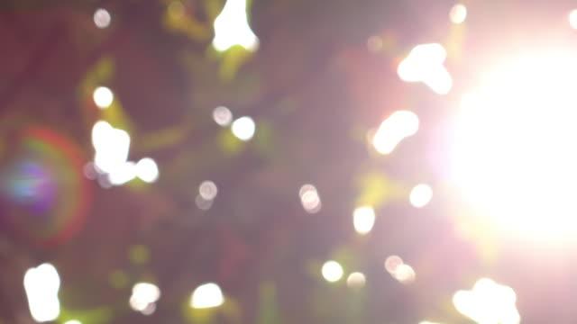sunlight through leaf on tree, 4k blur shot