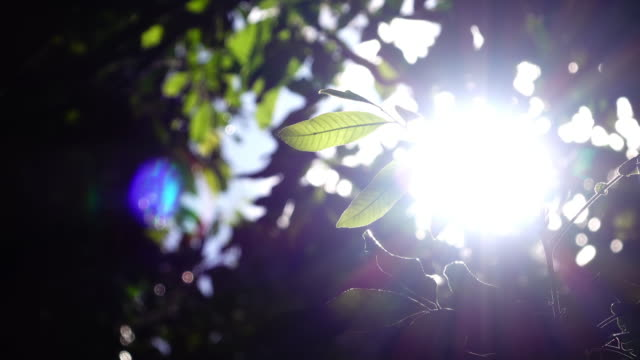 sunlight through leaf on tree