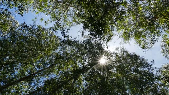 sunlight through leaves in summer. - tallträd bildbanksvideor och videomaterial från bakom kulisserna