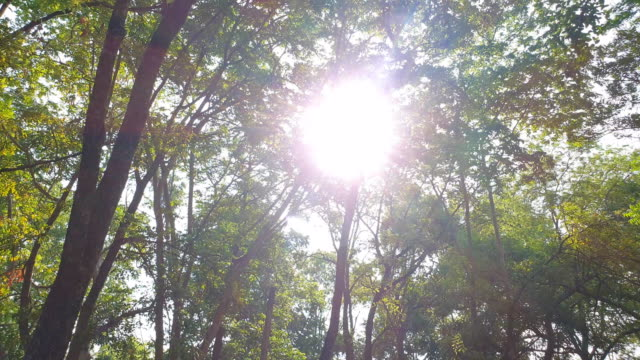 sunlight through leaves in tropical rain forests. - tropical tree stock videos & royalty-free footage