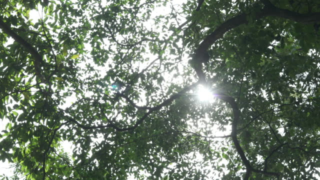 sunlight through leaves - hay fever stock videos and b-roll footage